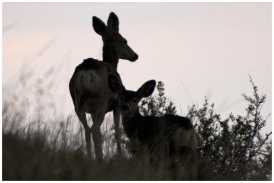 Dfine deer