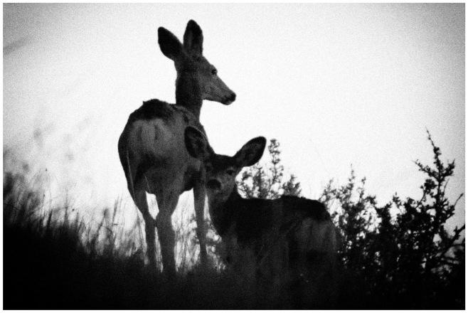 Holga deer