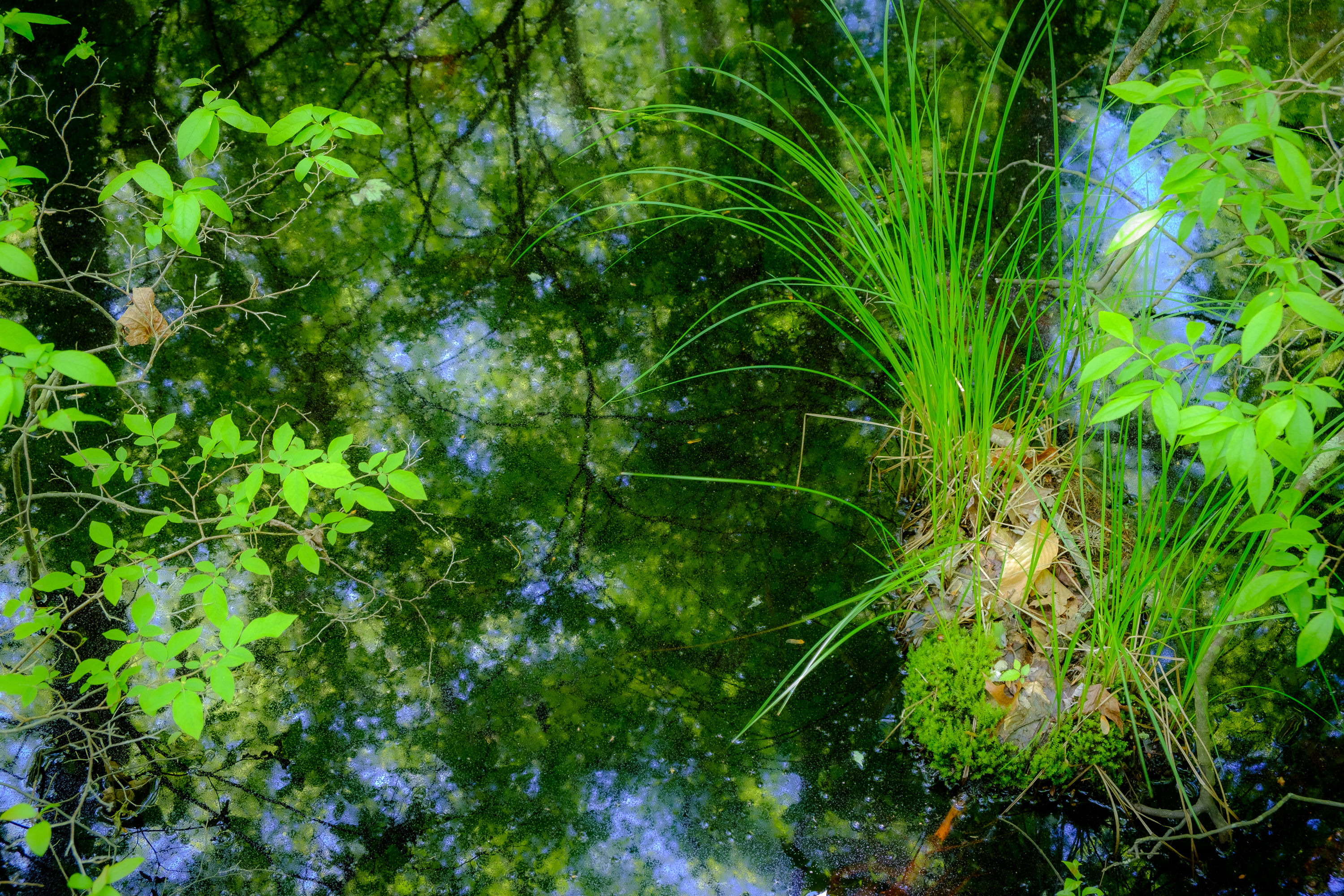 Reflections of Green #1