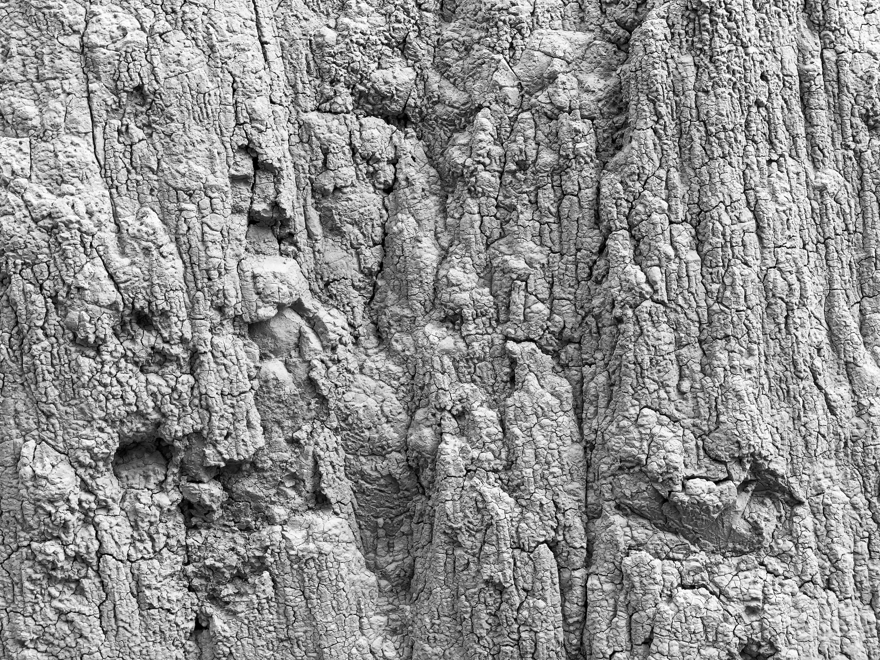 Texture of the Siltstone